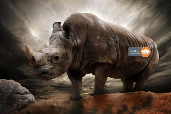 rhino_hubspot