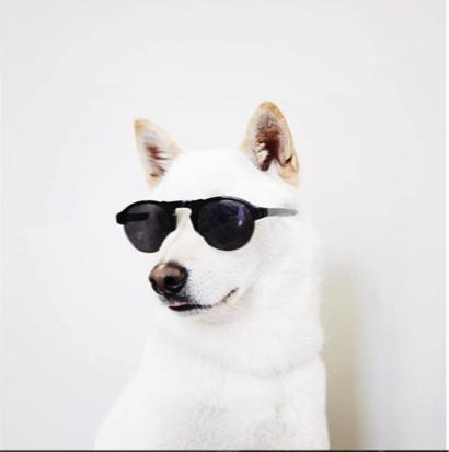 warby-barker-instagram.png