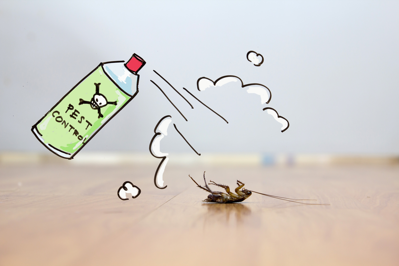 Marketing Pest Control Online   Rhino Digital Media